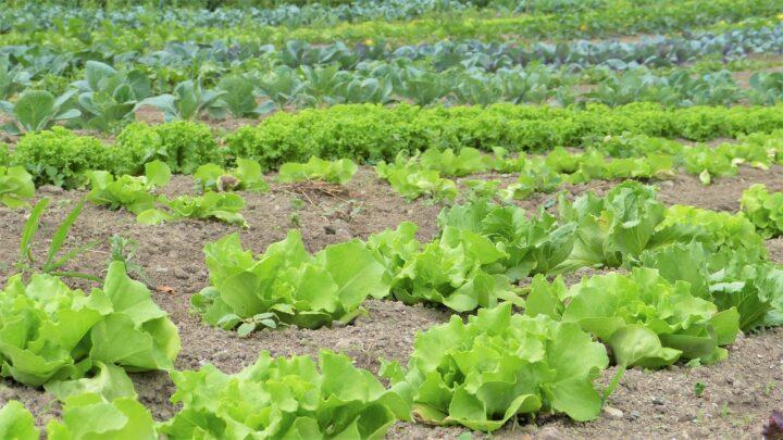 Ernteausfällen entgegenwirken: Plattformen verbinden Landwirt*innen und Erntehelfer*innen