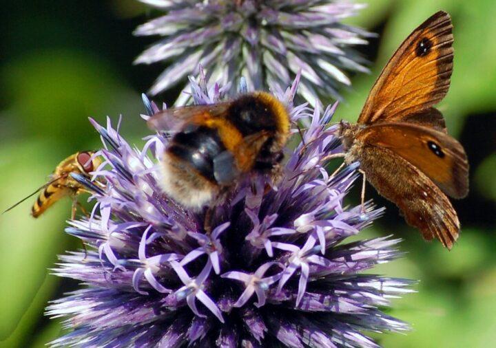 Was haben Insekten mit unserer Nahrung zu tun?